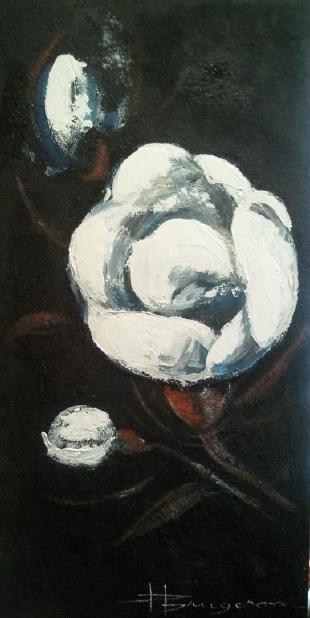 fleur de coton (80X80)